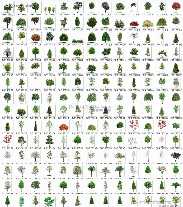 Tổng hợp rất nhiều Thư viện Photoshop Cây 027 bóng mát