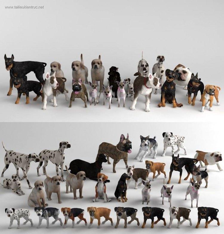 Thư viện 3dsmax về các loài chó trên thế giới