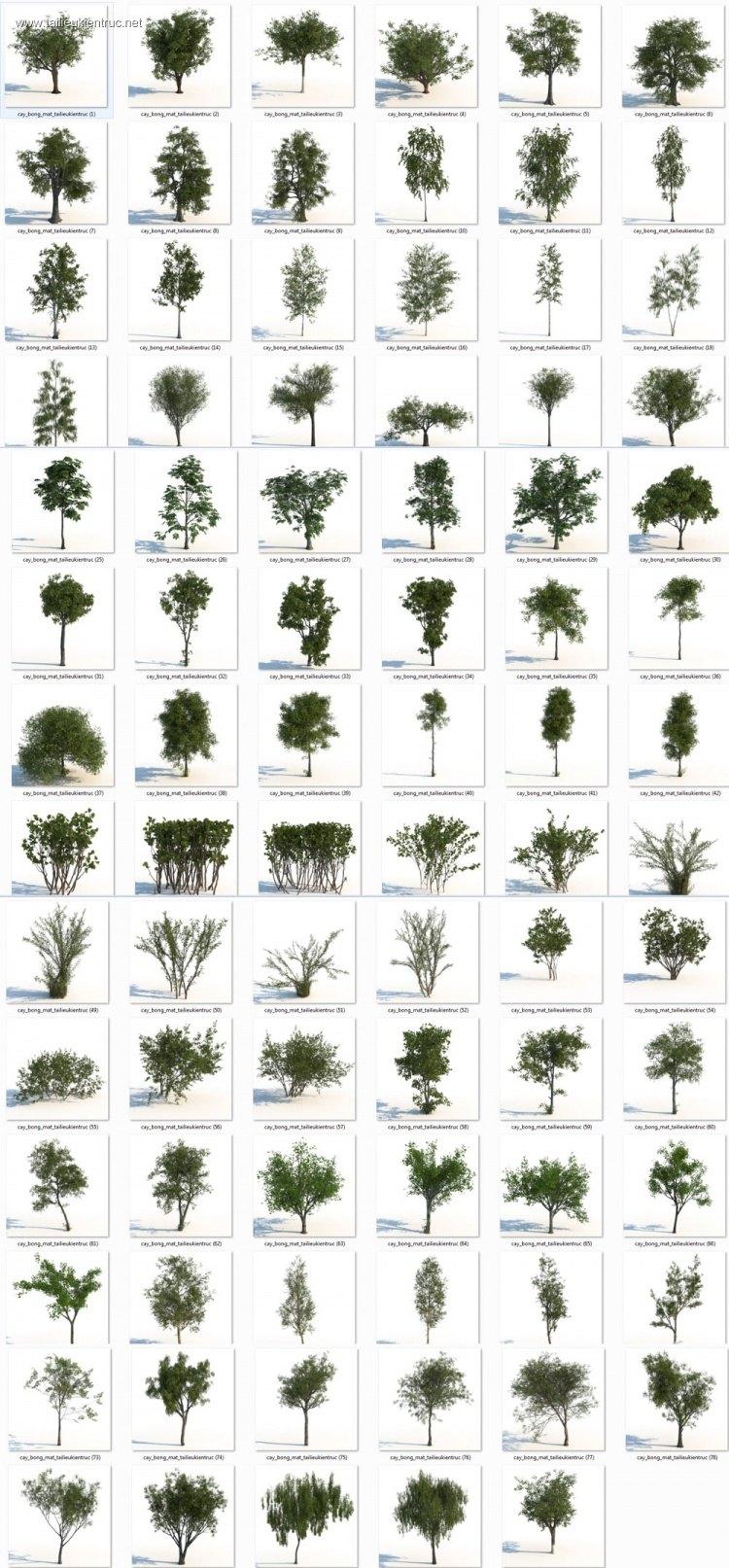Thư viện 3dsmax gồm 83 model cây Icube rất đẹp và chất lượng Full download