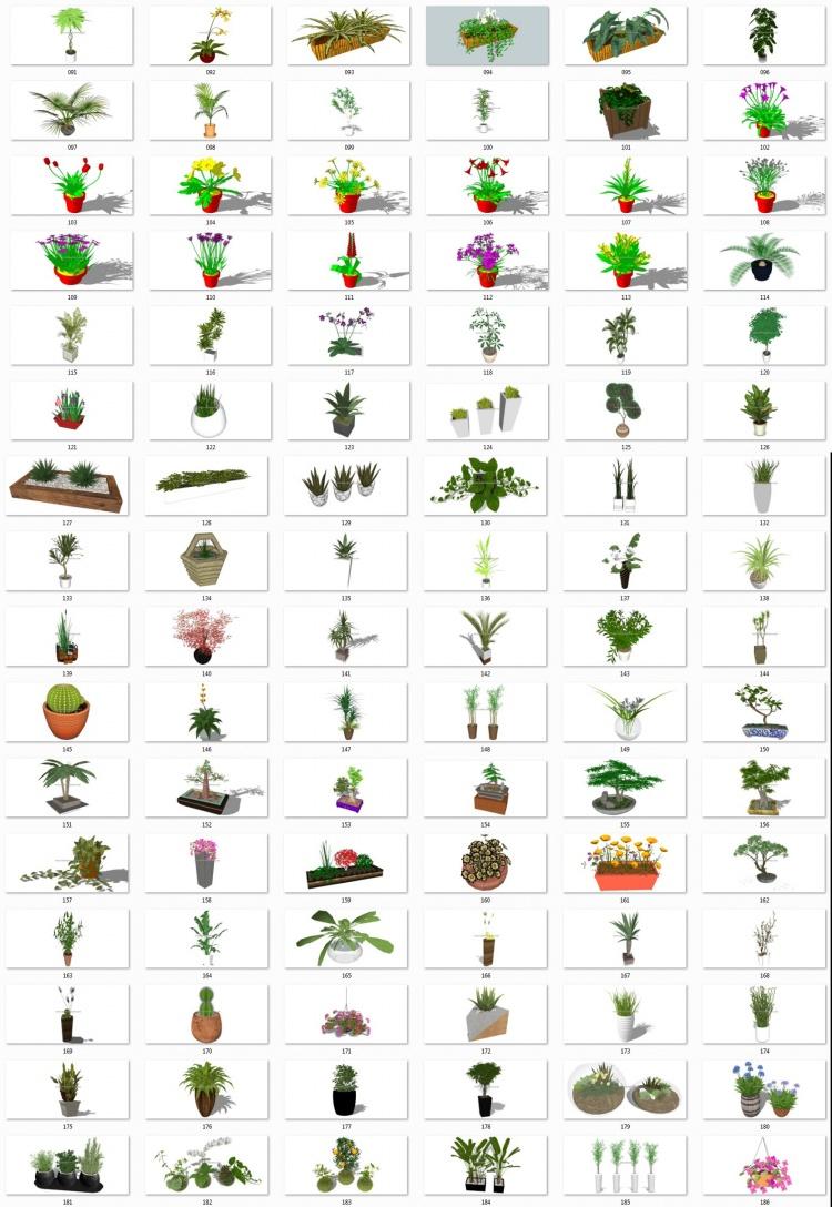 Thư viện Sketchup tổng hợp 96 Model về các loại Cây chất lượng cao P15