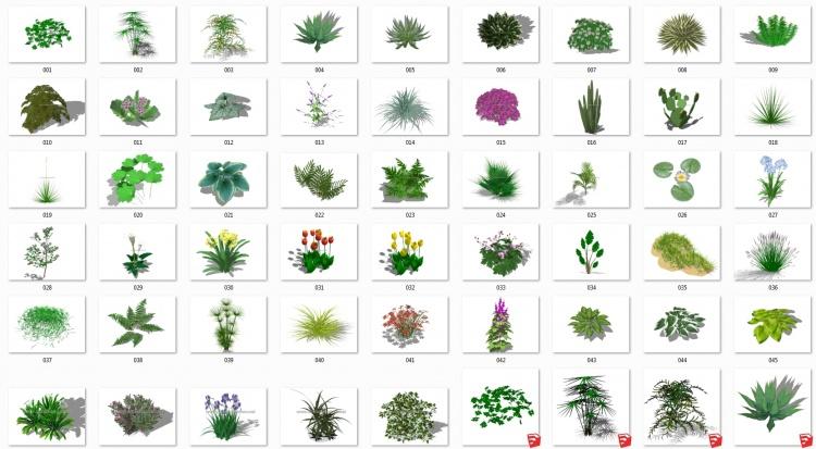 Thư viện Sketchup tổng hợp 50 Model về các loại Cây hoa, cây bụi chất lượng cao P16