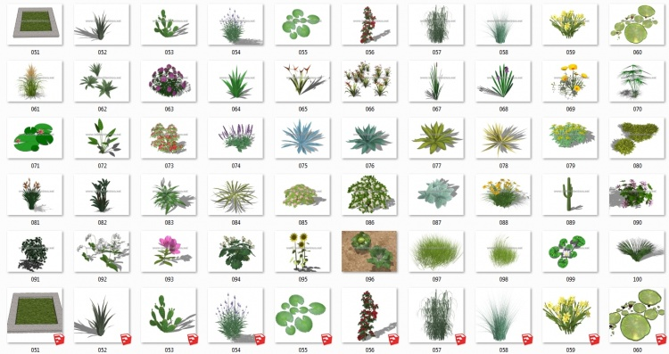 Thư viện Sketchup tổng hợp 50 Model về các loại Cây hoa, cây bụi chất lượng cao P17