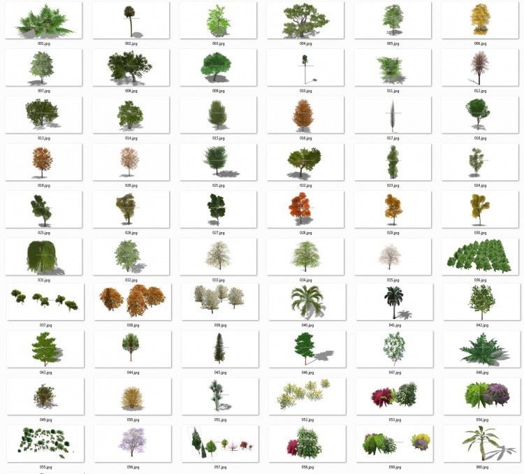 Thư viện Sketchup tổng hợp 60 Model về các loại Cây bóng mát, cây bụi chất lượng cao P20