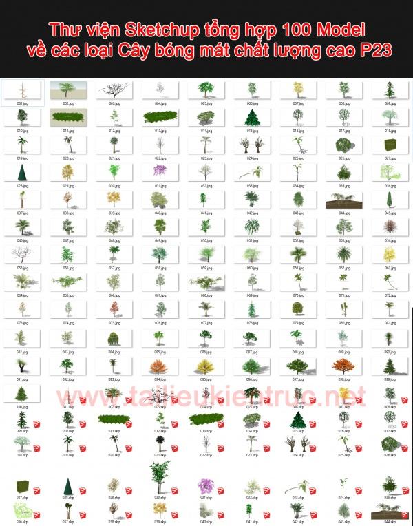 Thư viện Sketchup tổng hợp 100 Model về các loại Cây bóng mát chất lượng cao P23