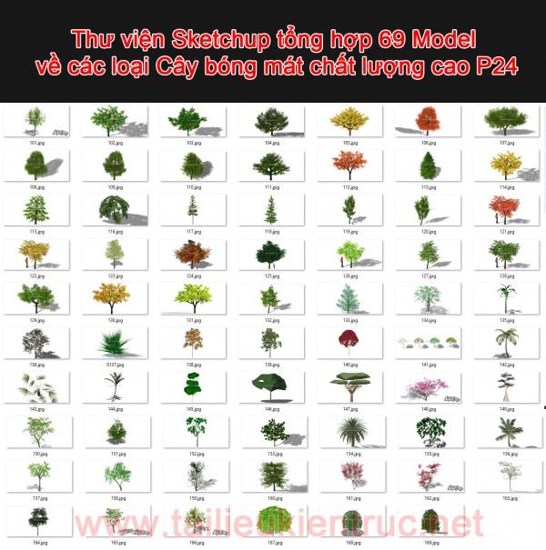 Thư viện Sketchup tổng hợp 69 Model về các loại Cây bóng mát chất lượng cao P24