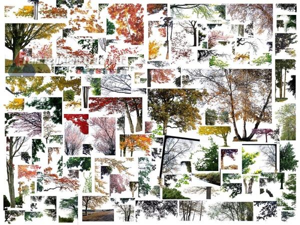 Thư viện photoshop Các loại Cây tổng hợp 080 với file PSD chất lượng cao