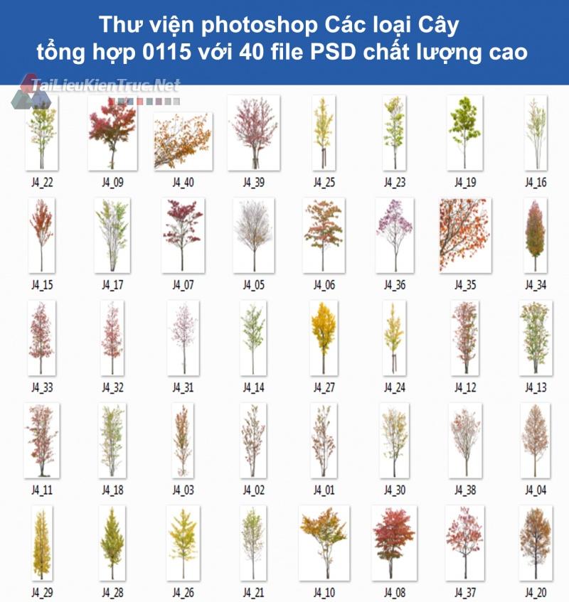 Thư viện photoshop Các loại Cây tổng hợp 0115 với 40 file PSD chất lượng cao