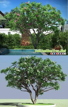 3d Model cây Hoa đại
