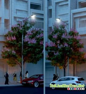 3d Model cây Bằng Lăng Tím