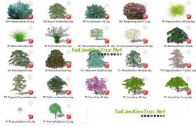 Tổng hợp 20 Model Sketchup về Cây các loại
