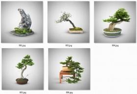 Thư viện 3ds Max tổng hợp về cây Bonsai 01 Full