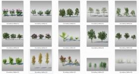 Thư viện 3d tổng hợp 16 Model về các loại Cây sân vườn Việt Nam