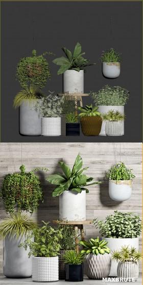 Thư viện 3d tổng hợp về các Chậu Cây nhỏ trang trí Plant Set đẹp