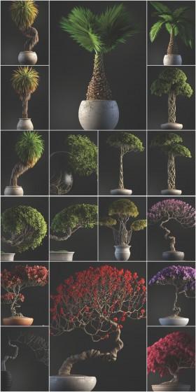 Thư viện 3d tổng hợp 21 Model về các Chậu Cây Bonsai chất lượng