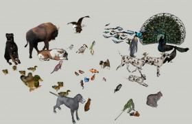 Thư viện sketchup về các con vật Animals 01
