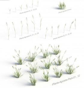 Thư viện Sketchup tổng hợp về các loại Cây cỏ chất lượng cao P10