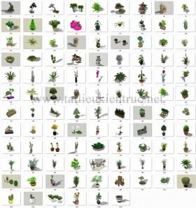 Thư viện Sketchup tổng hợp 105 Model về các loại Cây chất lượng cao P13
