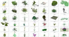 Thư viện Sketchup tổng hợp 50 Model về các loại Cây hoa, cây bụi chất lượng cao P18