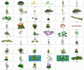 Thư viện Sketchup tổng hợp 50 Model về các loại Cây hoa, cây bụi chất lượng cao P19
