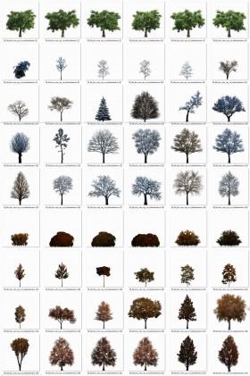 Thư viện photoshop Cây 029 với 56 file PNG chất lượng cao