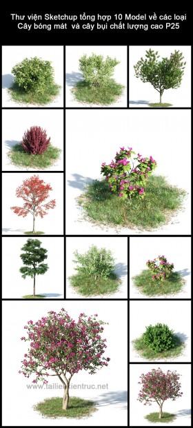 Thư viện Sketchup tổng hợp 10 Model về các loại Cây bóng mát và cây bụi chất lượng cao P25