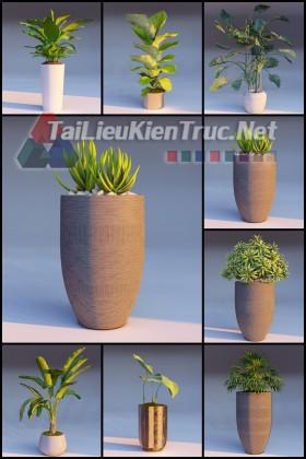 Thư viện Lumion Tổng hợp 8 Model về cây cối các loại chất lượng và đầy đủ