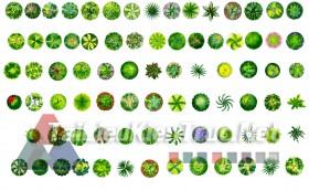 Thư viện photoshop Các loại Cây cối mặt bằng tổng hợp 094 với file PSD chất lượng cao