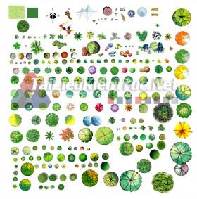 Thư viện photoshop Các loại Cây cối mặt bằng tổng hợp 095 với file PSD chất lượng cao