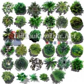 Thư viện photoshop Các loại Cây cối mặt bằng tổng hợp 096 với file PSD chất lượng cao
