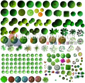 Thư viện photoshop Các loại Cây cối mặt bằng tổng hợp 098 với file PSD chất lượng cao