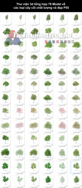 Thư viện 3d tổng hợp 78 Model về các loại cây cối chất lượng và đẹp P55