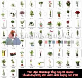 Thư viện Sketchup tổng hợp 65 Model về các loại Cây sân vườn chất lượng cao P29