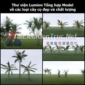 Thư viện Lumion Tổng hợp Model về các loại cây cọ đẹp và chất lượng