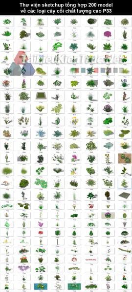 Thư viện Sketchup tổng hợp 200 Model về các loại cây cối chất lượng cao P33