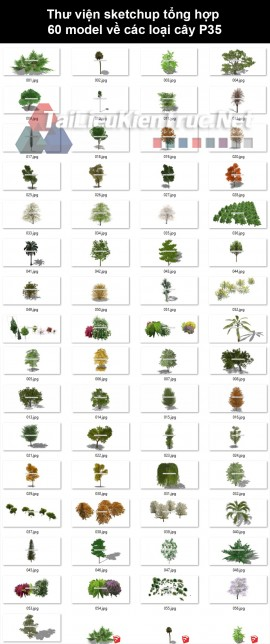 Thư viện Sketchup tổng hợp 60 Model về các loại cây cối P35