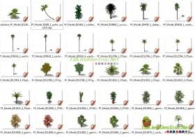 Thư viện Sketchup - Cây dừa các thể loại 0024